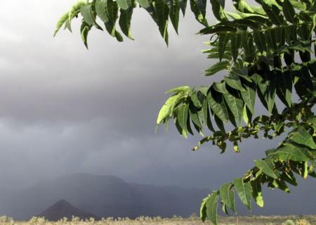 9-8-13--Chinese-sumac-monsoon