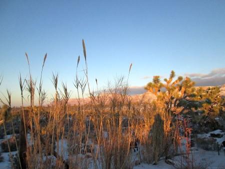 1-1-15-reeds-cliffs