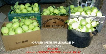 2015-6--GrannySmithHarvest