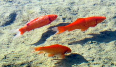 2016-2-11--fish