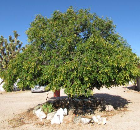 Tree-need-id-1