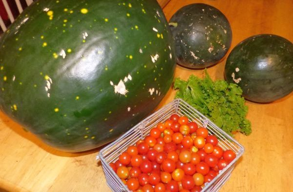 Melons, Peace Vine Tomatoes and Southern Giant Curled Mustard